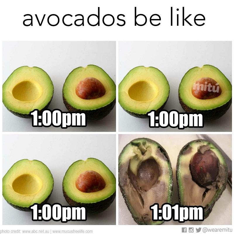 stadiile de coacere ale unui avocado - ce sa faci ca sa se coaca un avocado